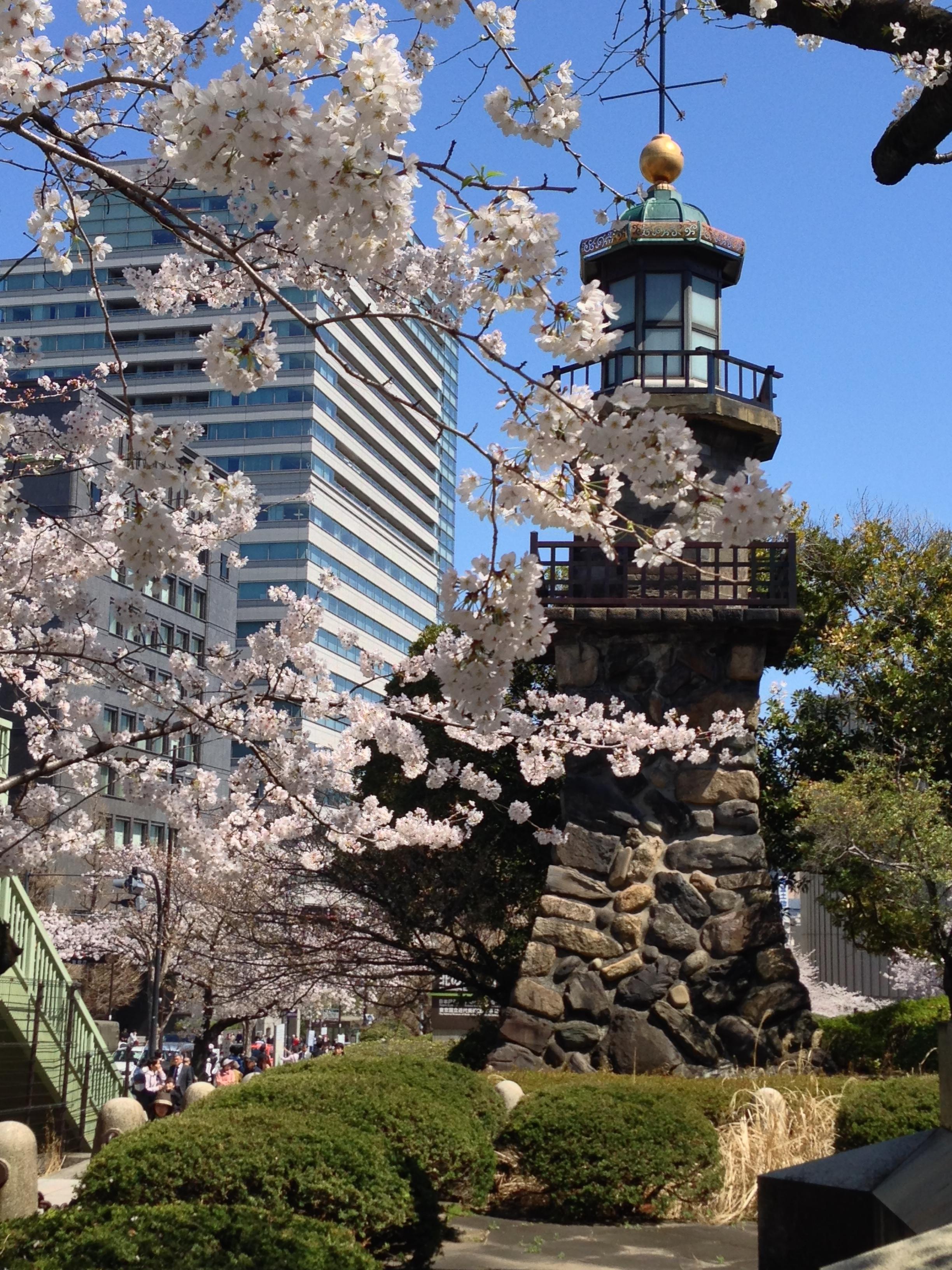 The gorgeousness that is sakura