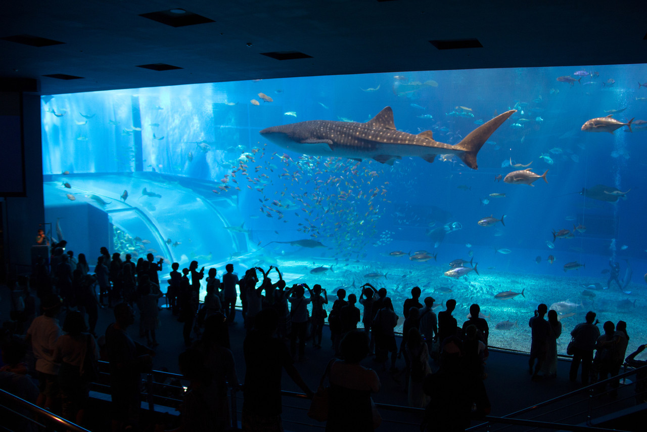Churaumi Aquarium's record-setting viewing tank