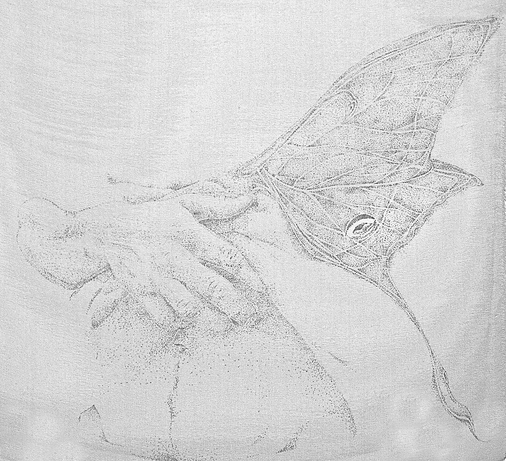 Moths Wings.jpg