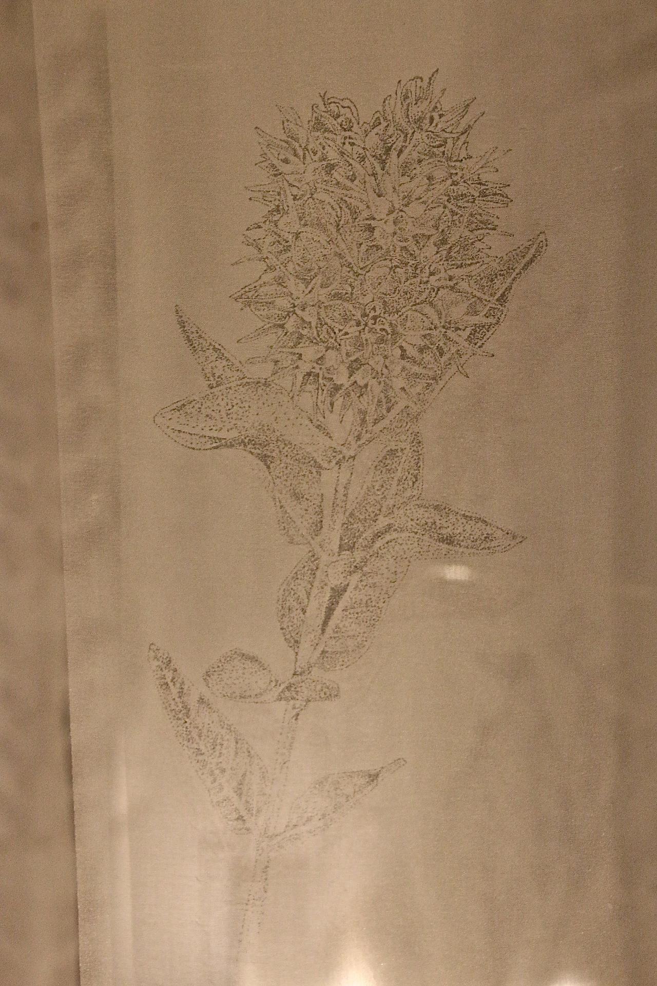 Milkweed.jpg