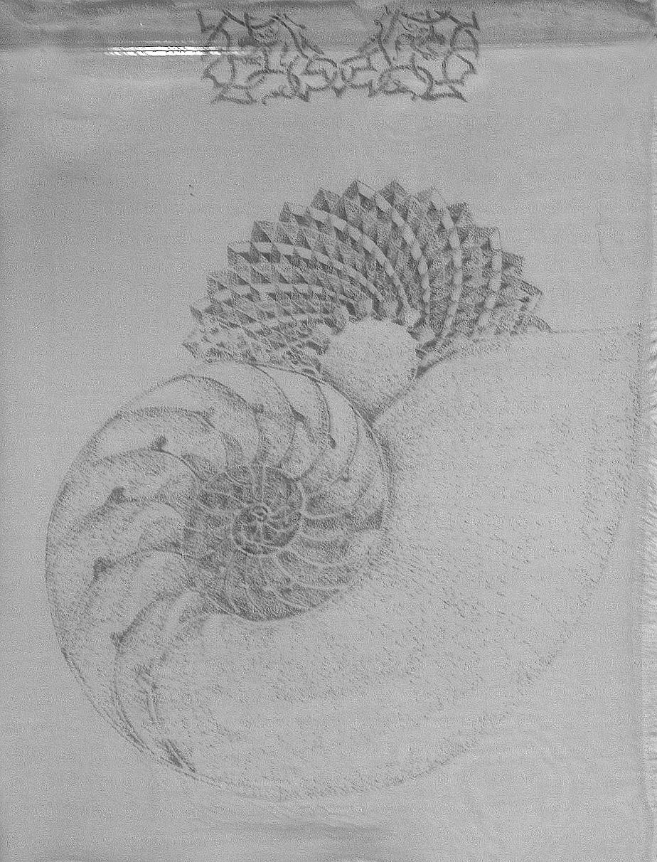 Nautilus X Ray.jpg