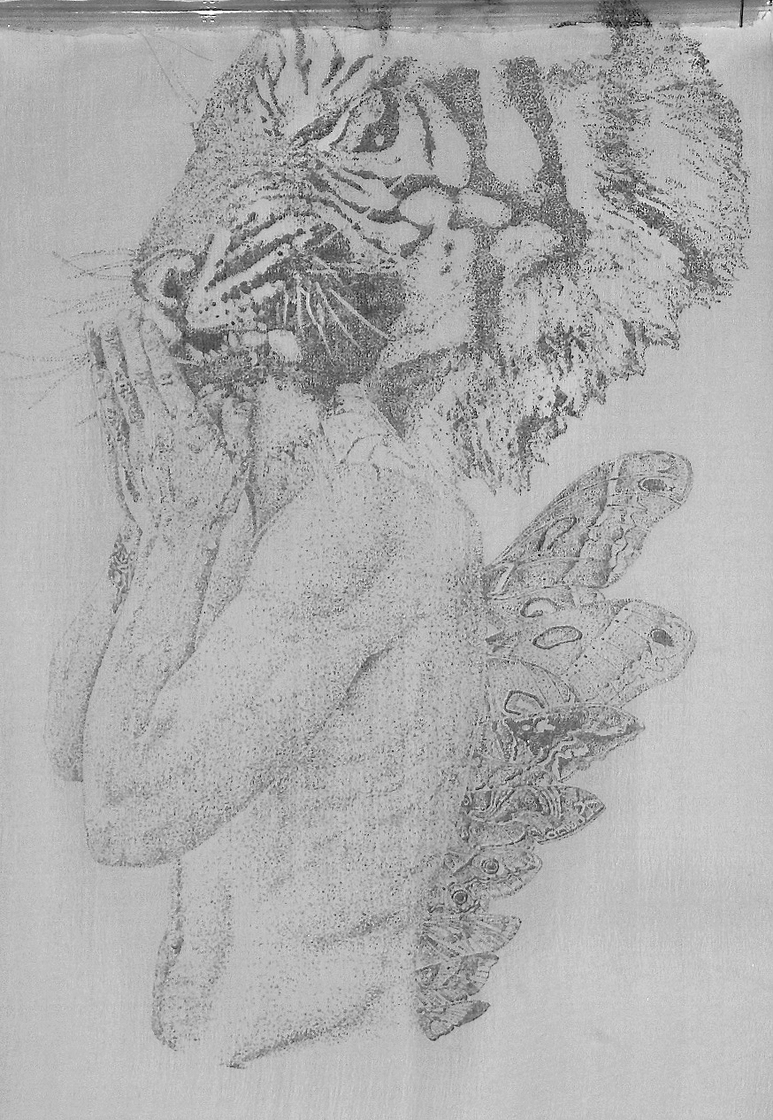 Tiger and Moth.jpg