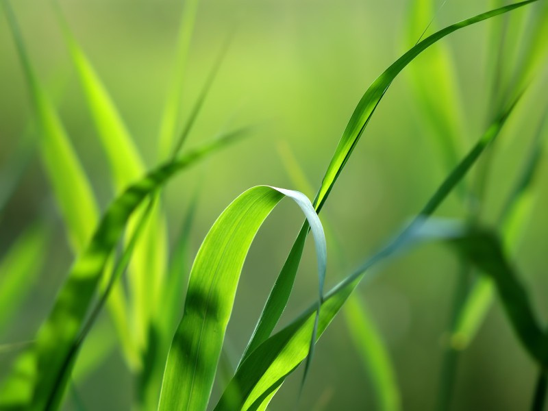 groen_lentegras.jpg