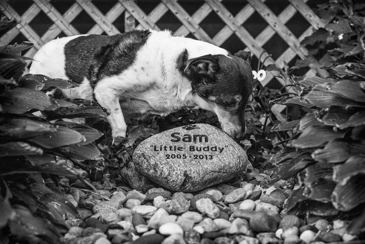 sam stone-1.jpg