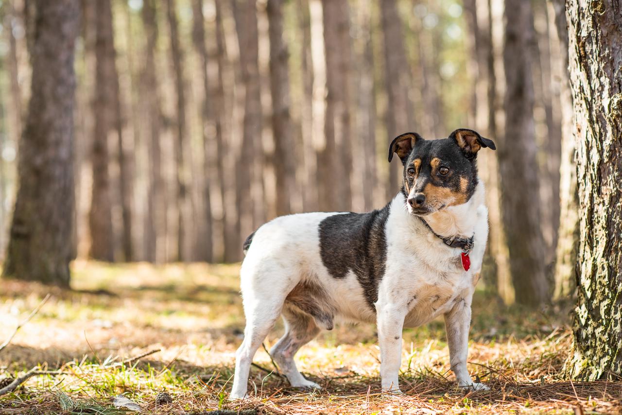 dog-tree-ratterrier-1.jpg