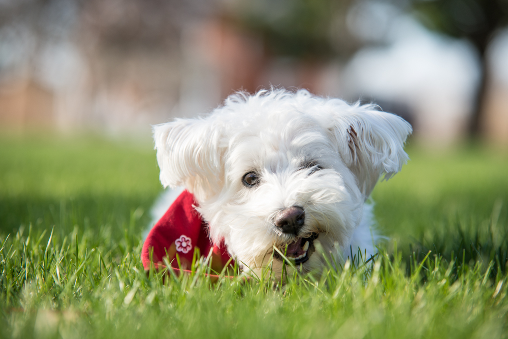 dog-treat-grass