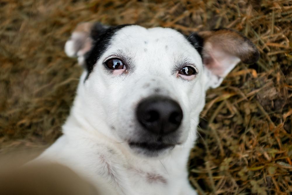 dog selfie terrier trump white fall
