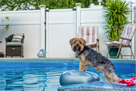 dog-pool-terrier-water