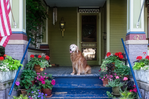dog-porch-photographer