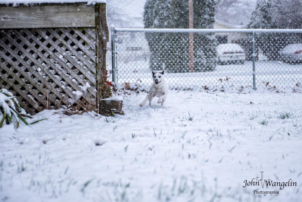 terrier-snow-illinois