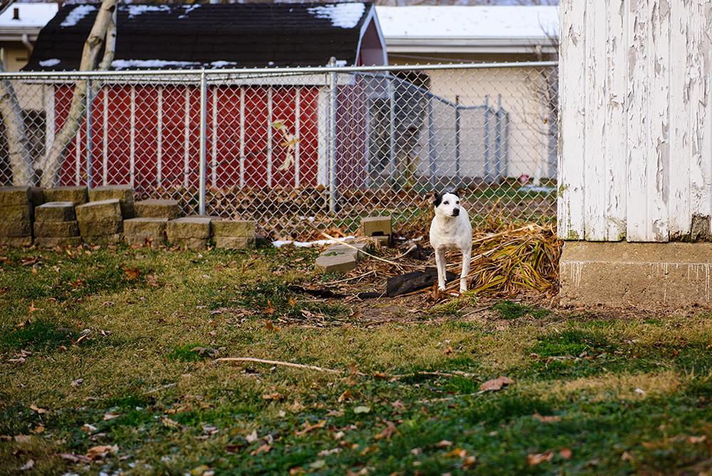 terrier-grass-winter-old-stuff