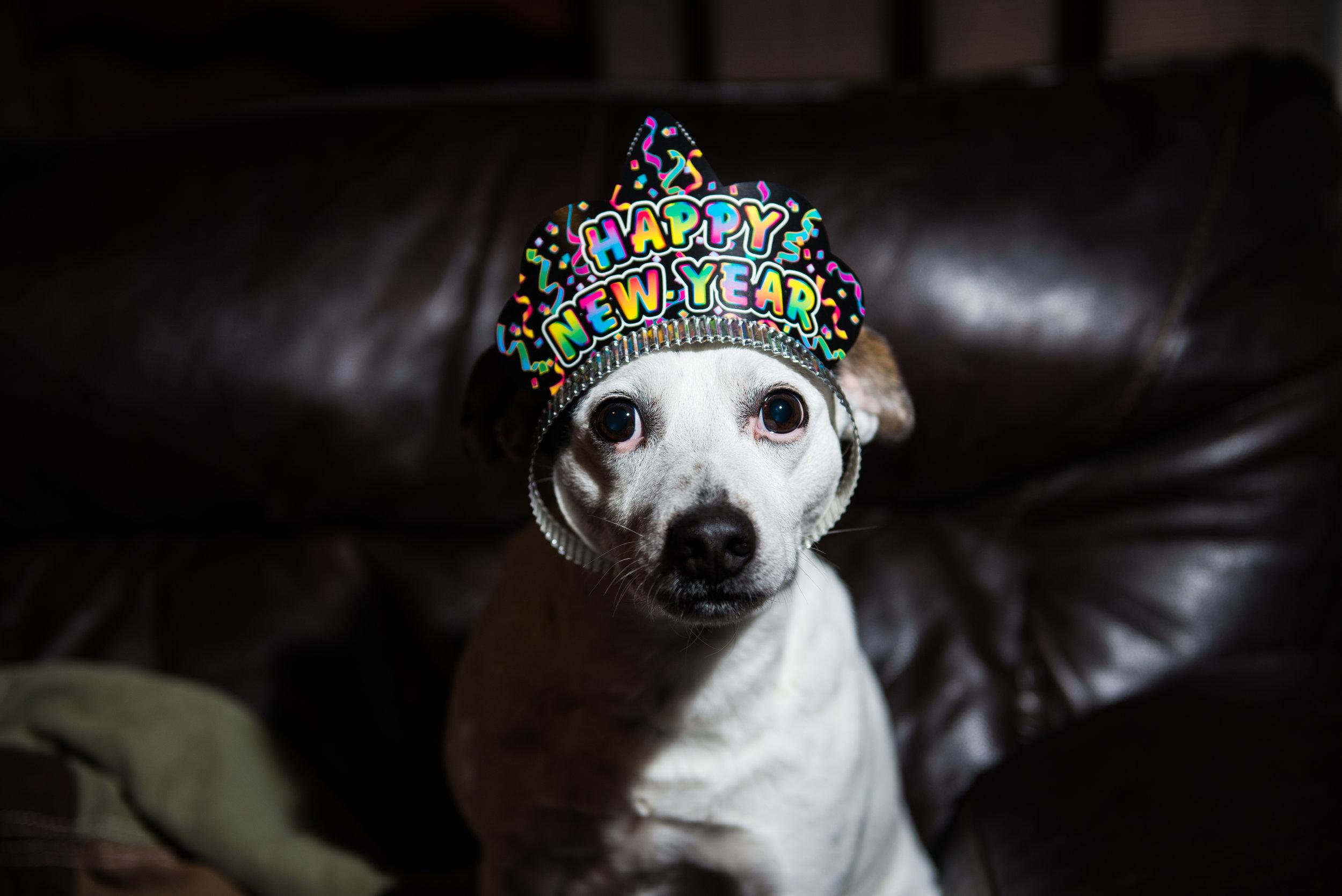 terrier-newyears-hat