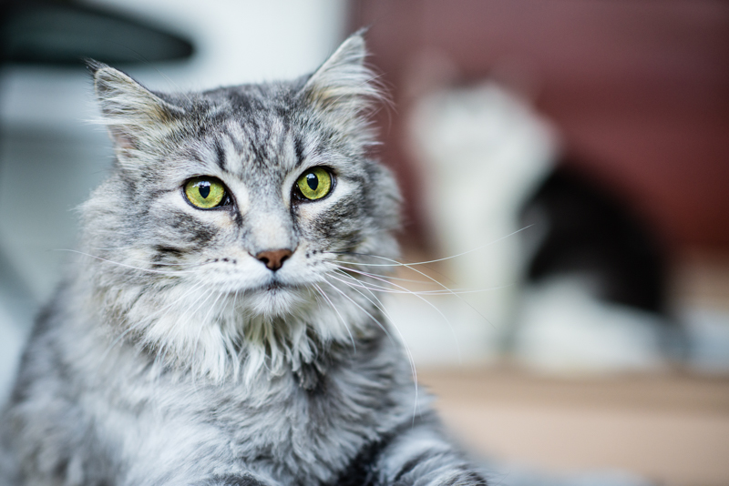 cat blog.jpg