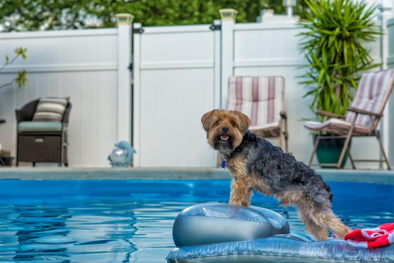 terrier pool