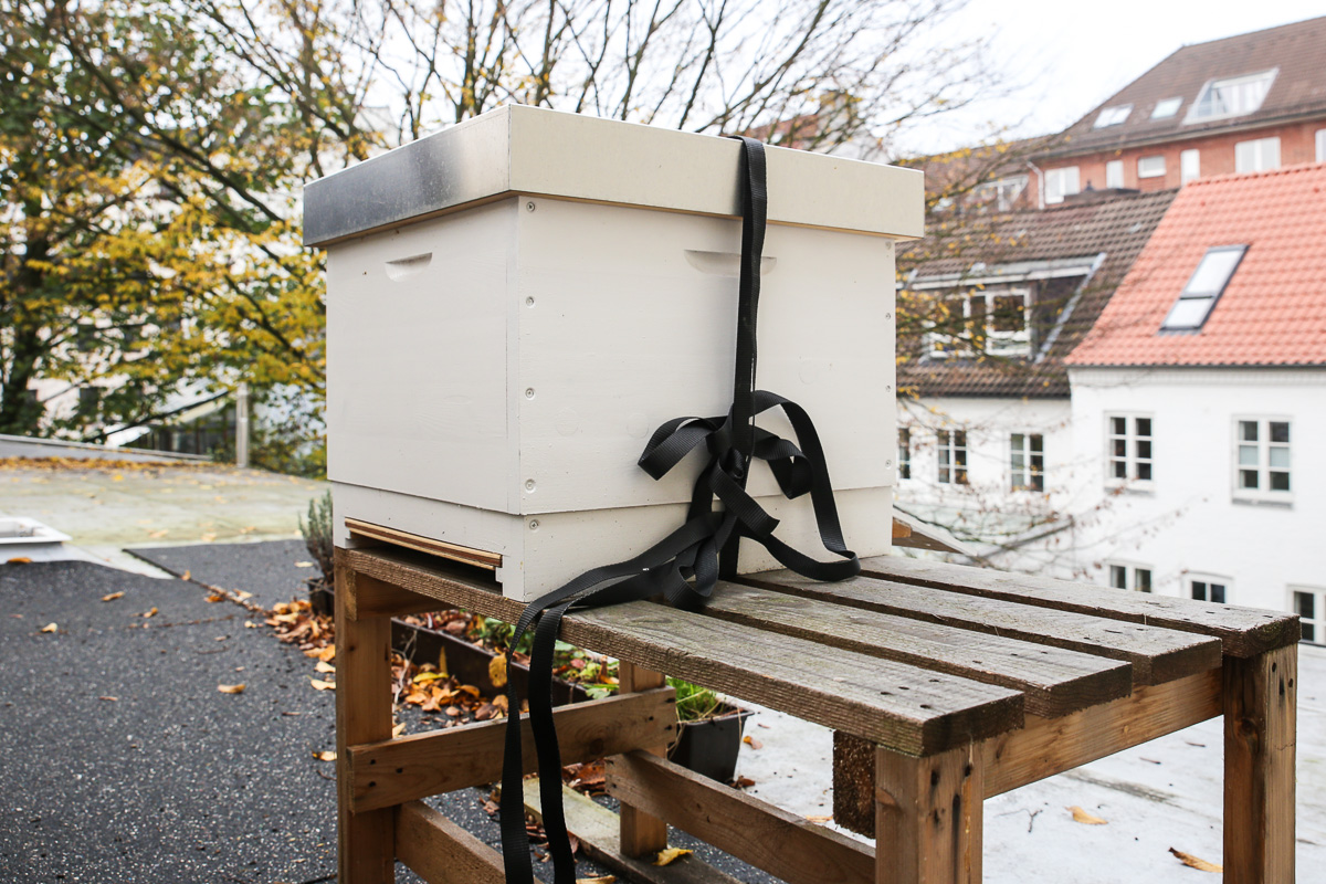 Golden Girls Honey, Honig aus Ottensen von Fotomaki. ©Susanne Baade, www.susies-local-food.com