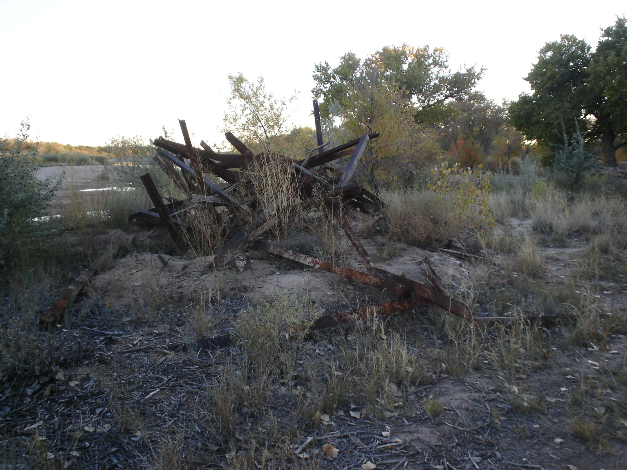 Original Site Condition, Fall 2008 Rio Grande Bosque, Albuquerque New Mexico