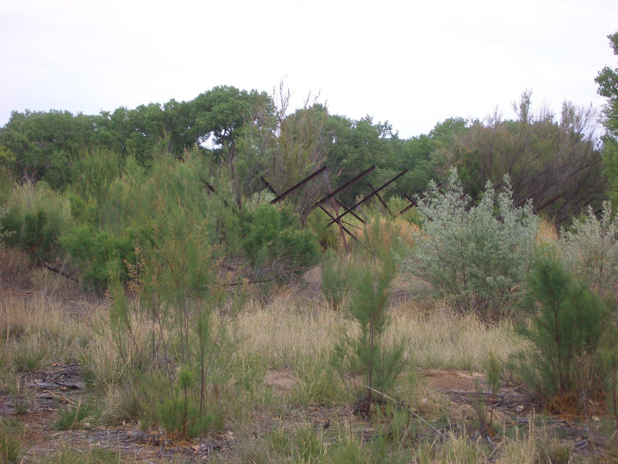 Jetty Jacks in the Rio Grande Bosque, Albuquerque New Mexico