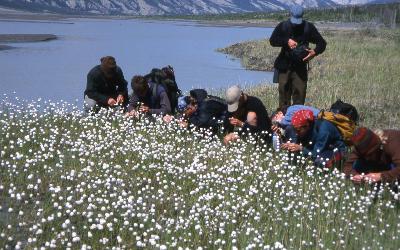 keyingplantsSlimsRiver Alaska 2001 014.jpg