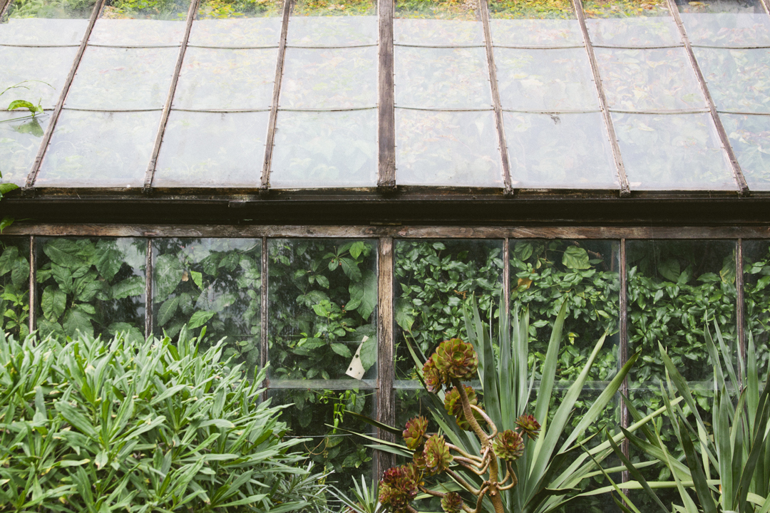 Print Club Ltd. visits the Chelsea Physic Garden