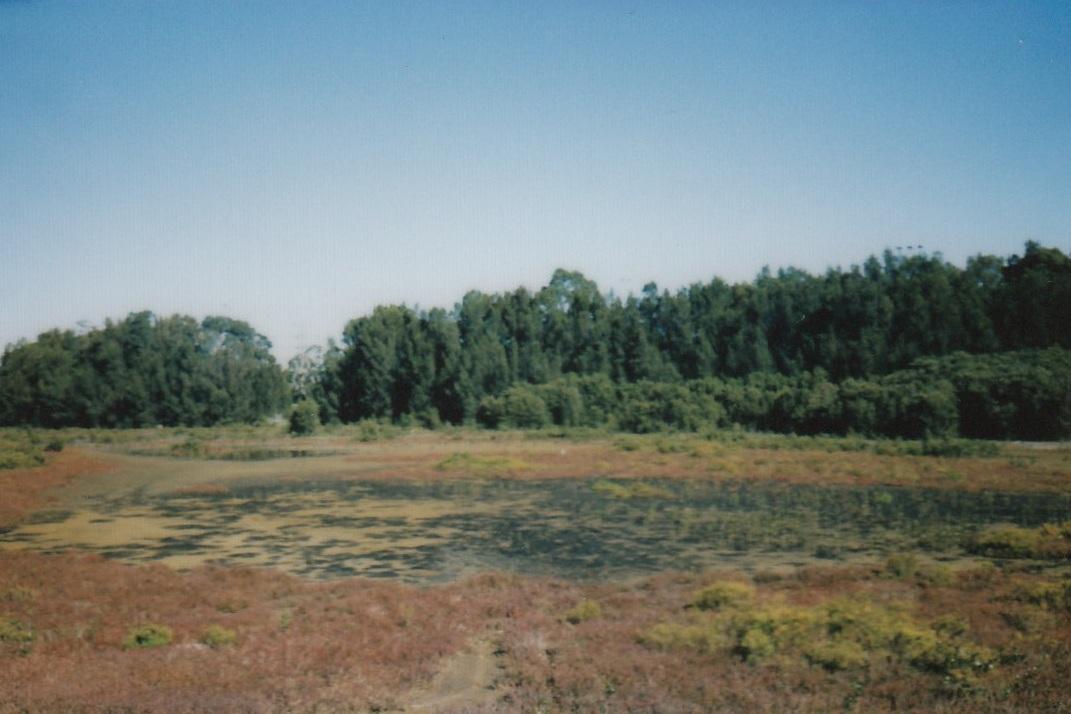 North Strathfield - T9