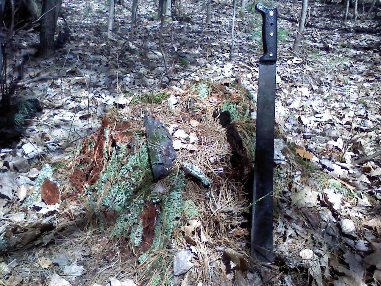 Remains of what is believed to be a GLO White Pine line tree, now stump with evidence of charring, possibly from the Great Michigan Fire of 1871, Section 6, Sheridan Township, Mason County, recovered October 2013
