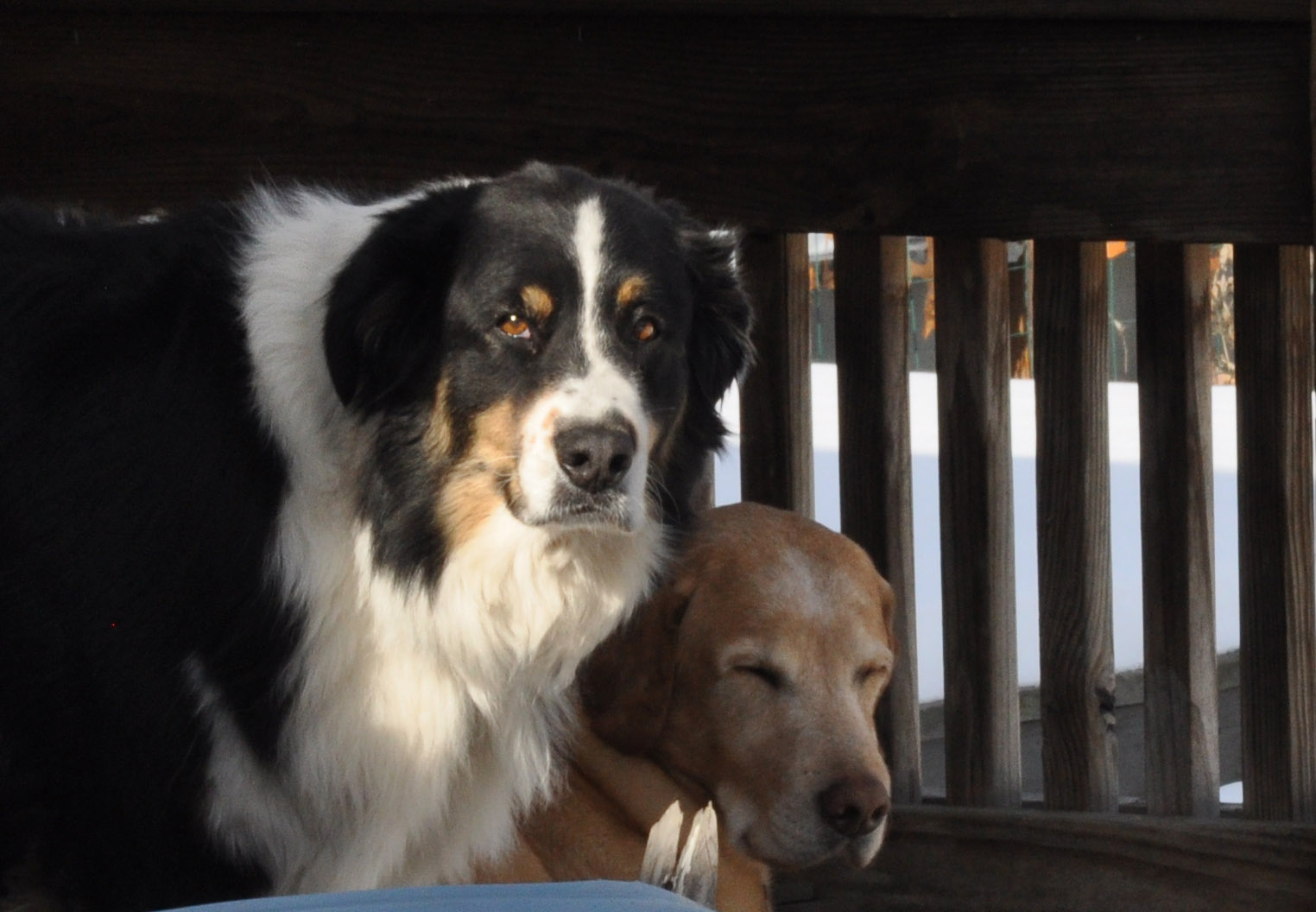 My Two Dogs, Bob and Norman, are the most important part of my studio!