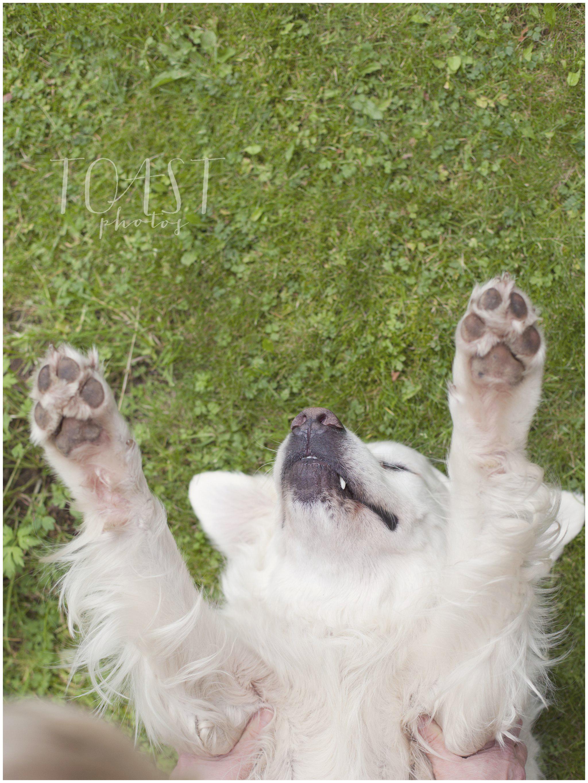 koirahierontaa.jpg