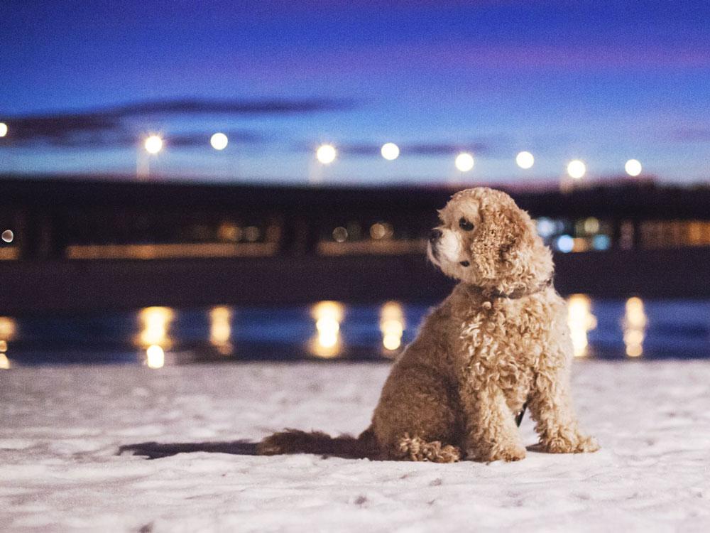 Talvinen illansuu Vuosaaren sillankupeessa.
