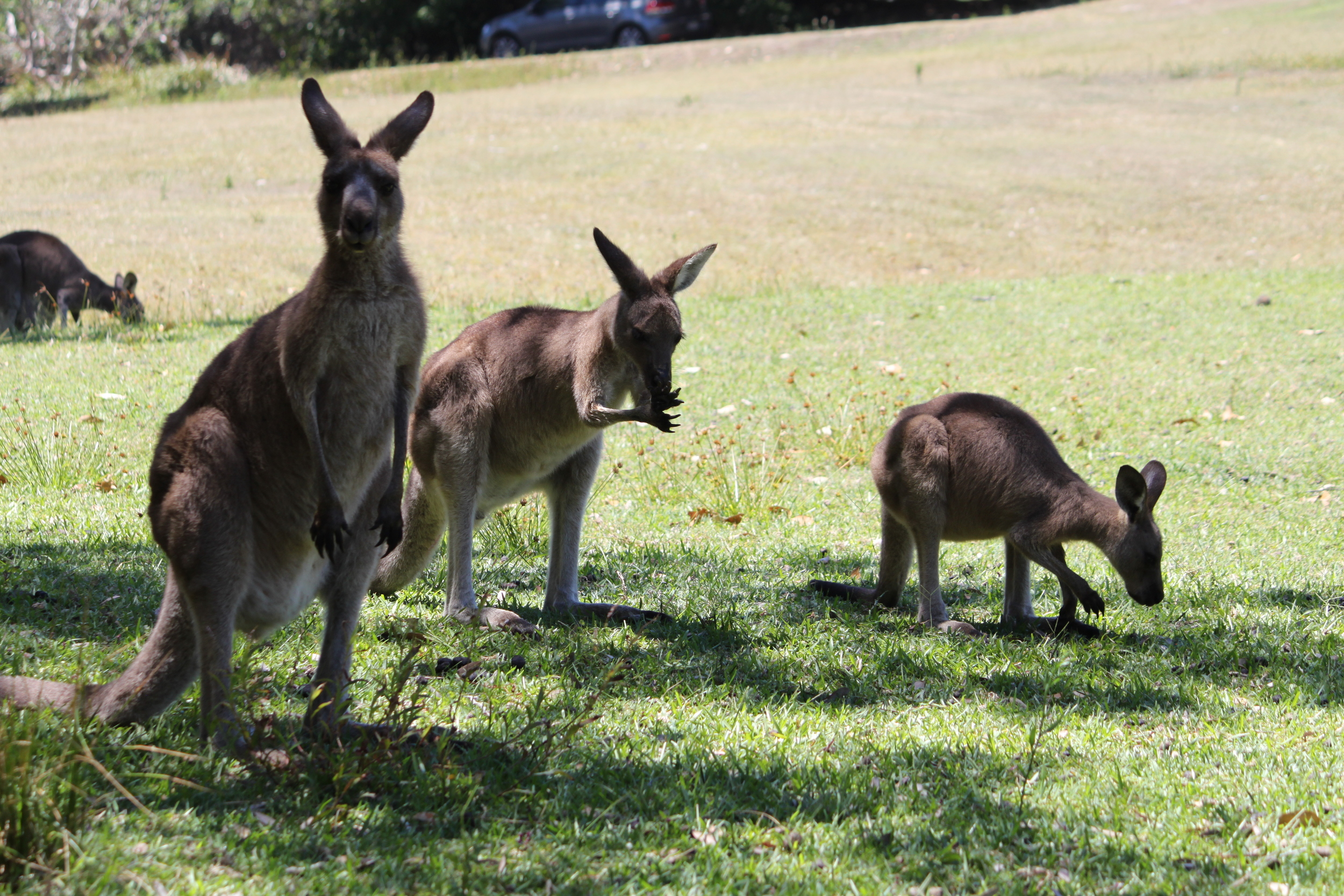 oh hey there, cute kangaroo clan.
