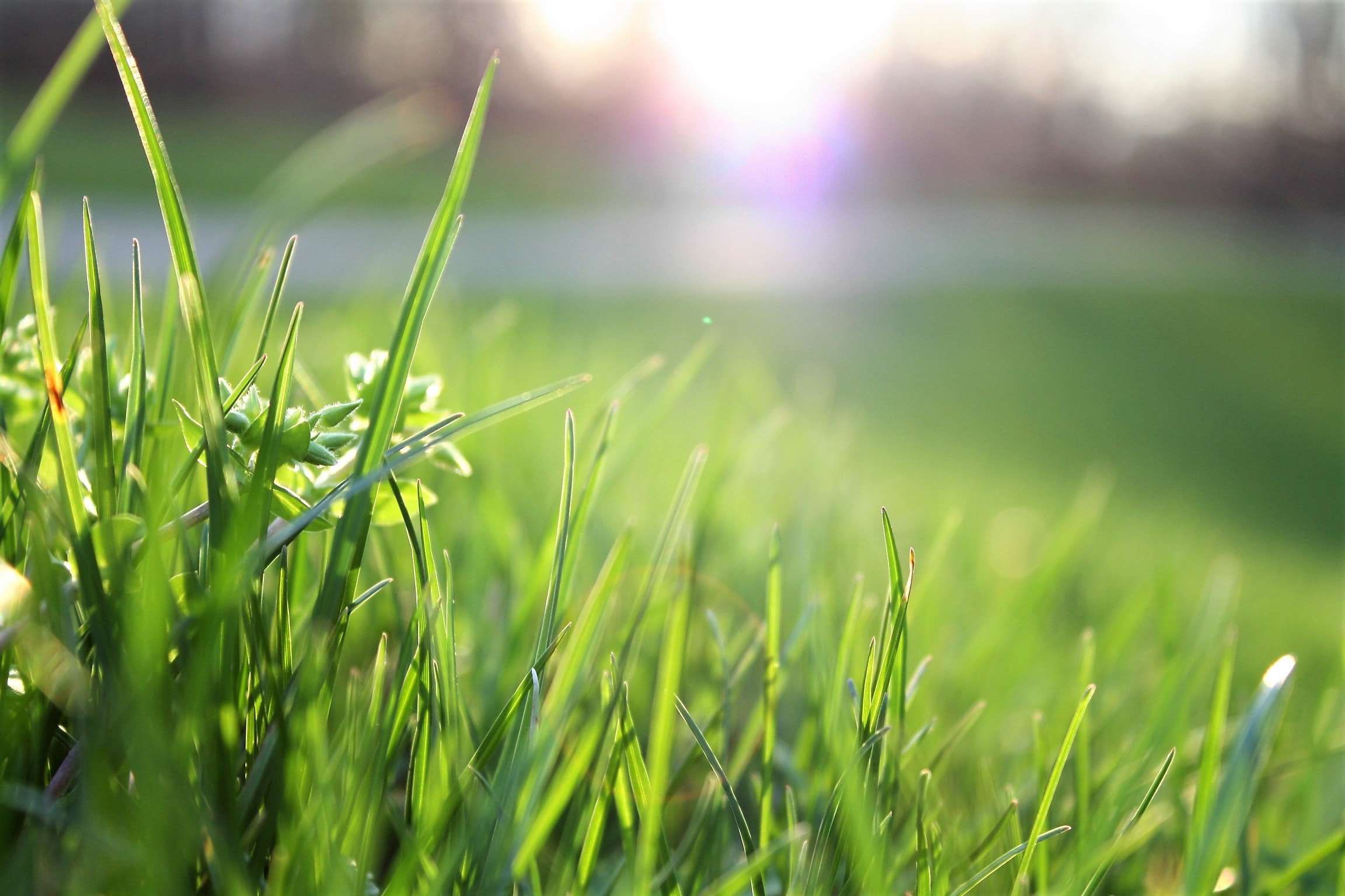 blade-of-grass-depth-of-field-environment-580900.jpg