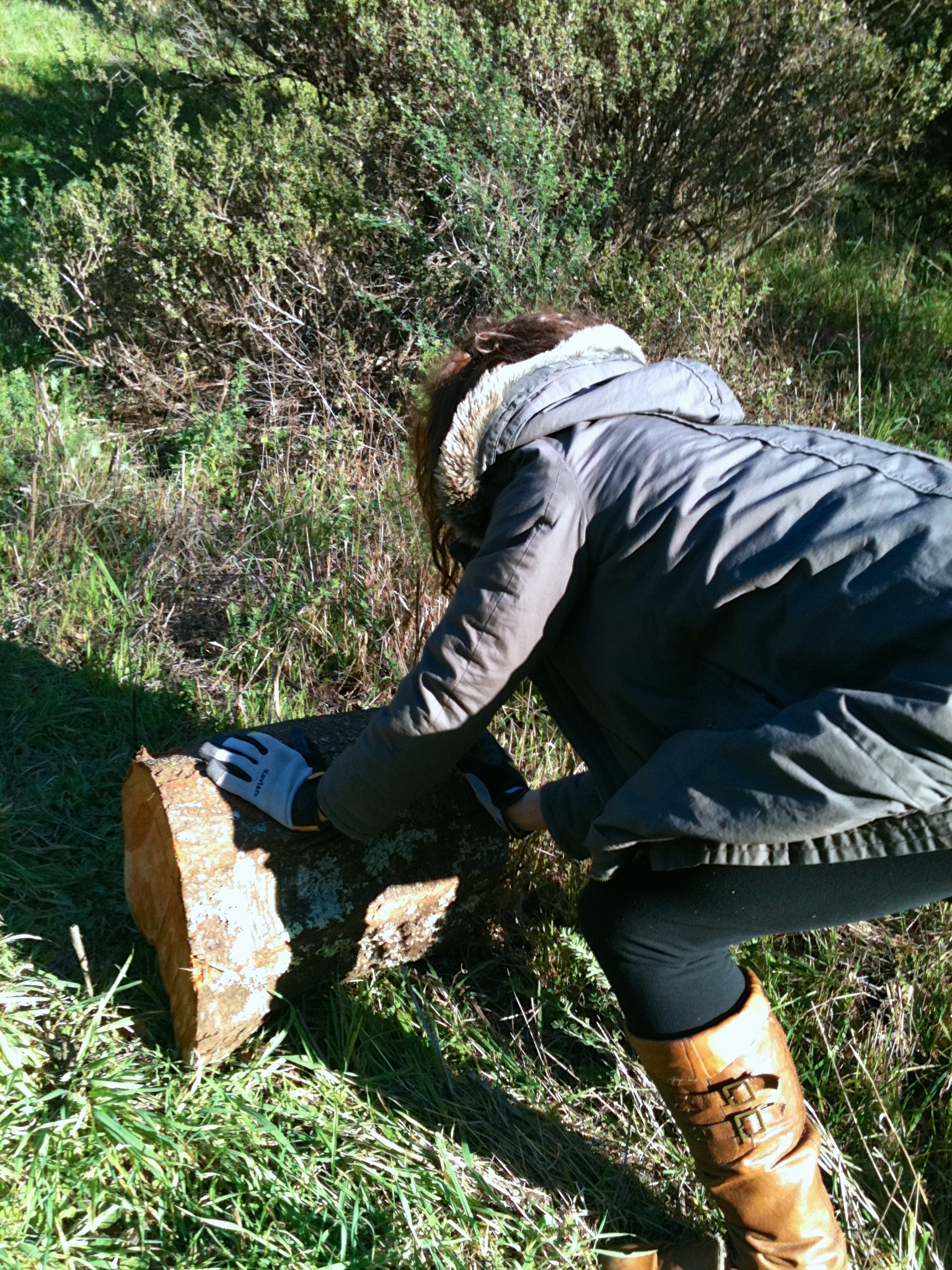 Hauling the stump out of a ravine.