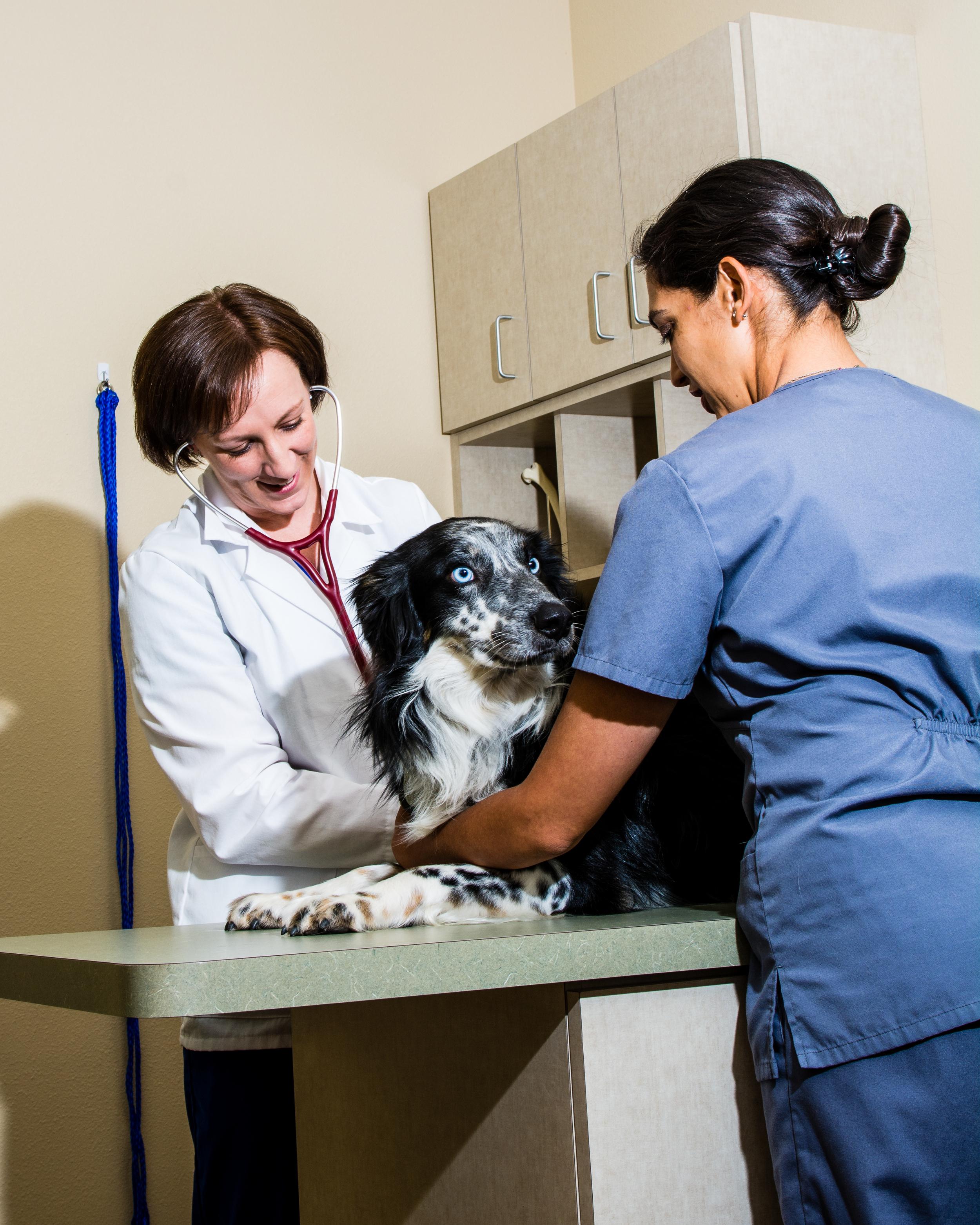 albuquerque veterinarian.JPG