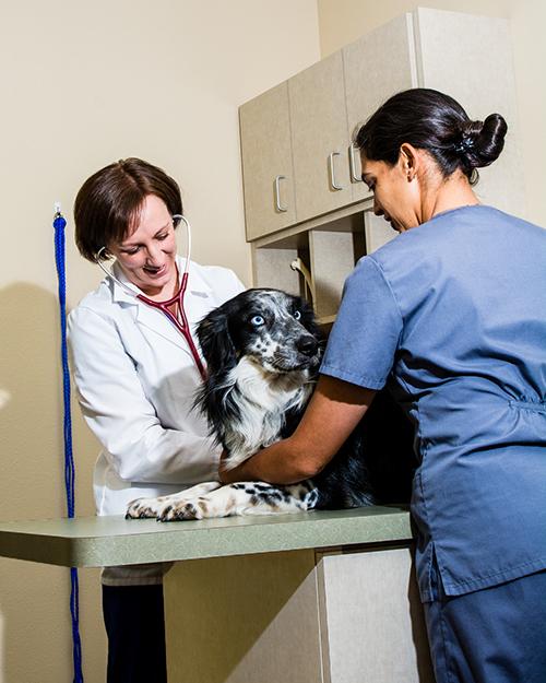 Veterinarian Albuquerque