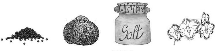 caviar truffles sea salt orchids skin care