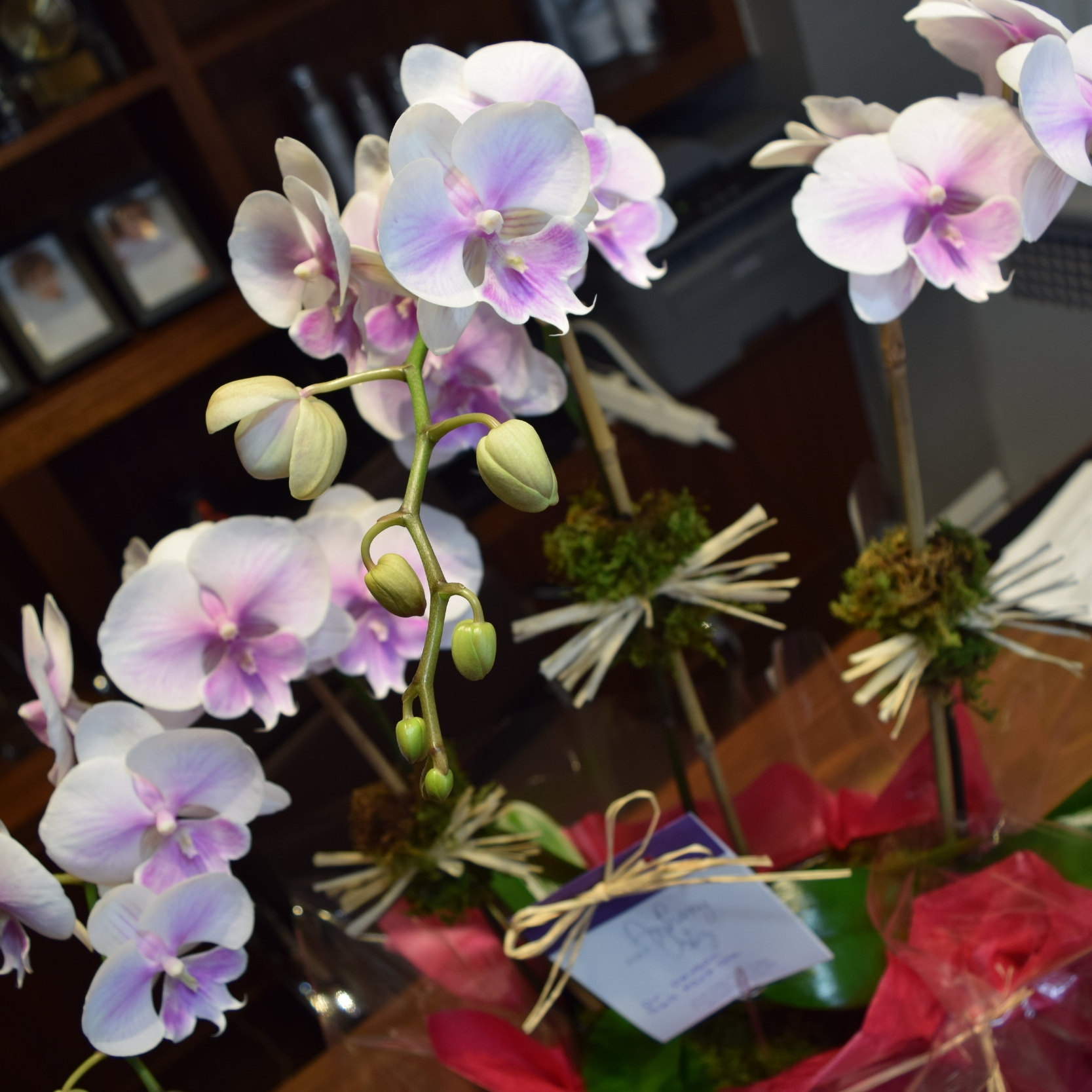 Orchids from a happy cosmetic patient