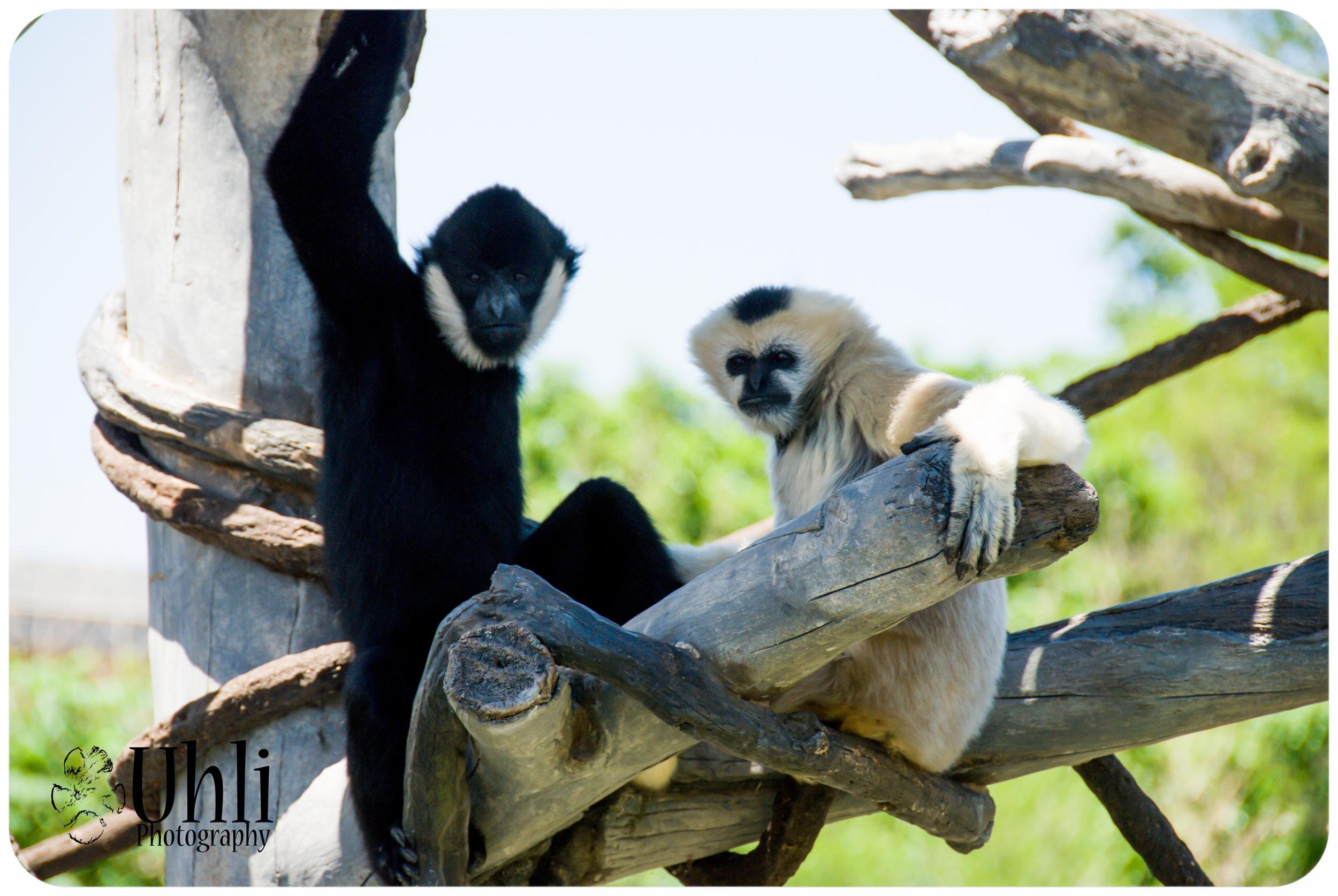6.9.13 - Zoo Venture, Monkeys!
