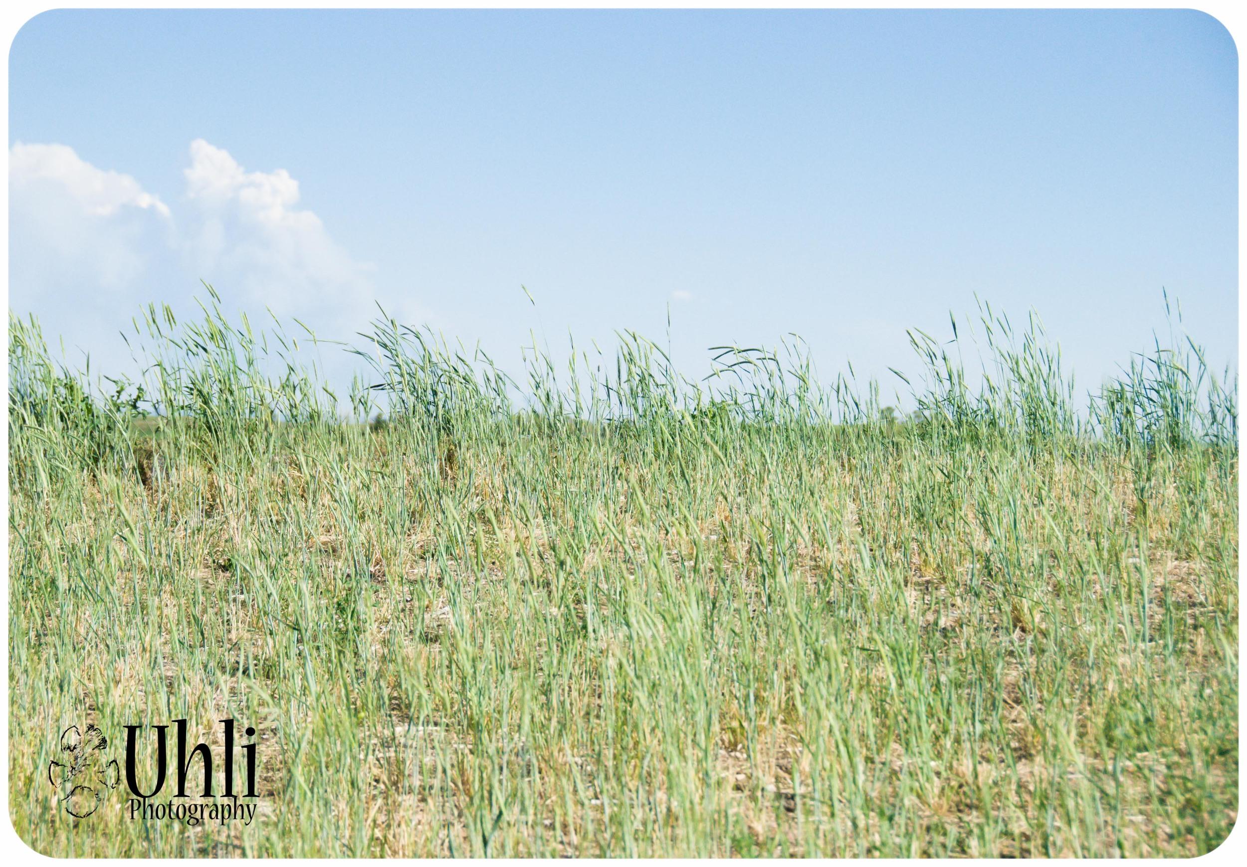 6.11.13 - Grass, Wind, Blue Sky - I love Colorado