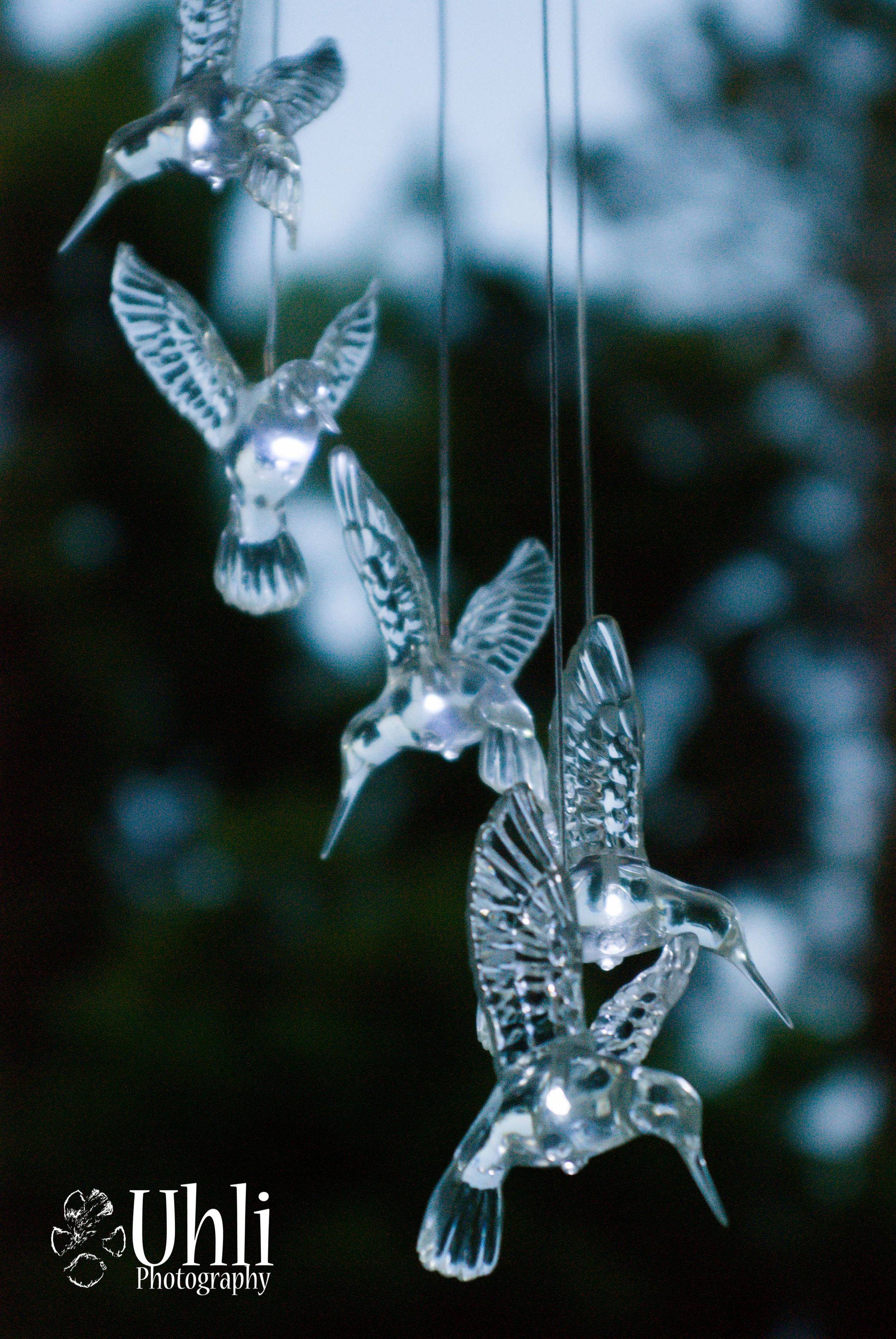 6.16.13 - Hummingbird Lights