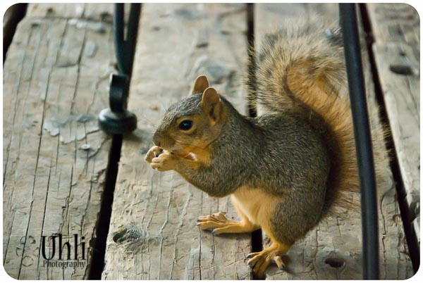 7.11.13 - SQUIRREL! He wouldn't leave us alone at dinner...