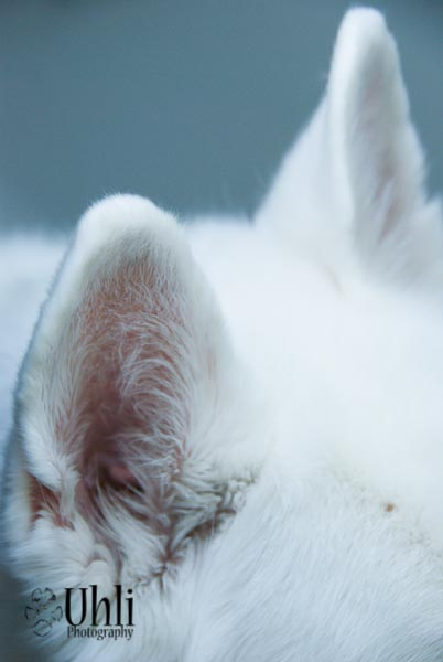 7.16.13 - My Dog has Cat ears...