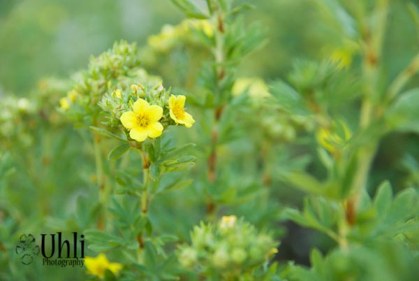 7.17.13 - Yellow Flowers