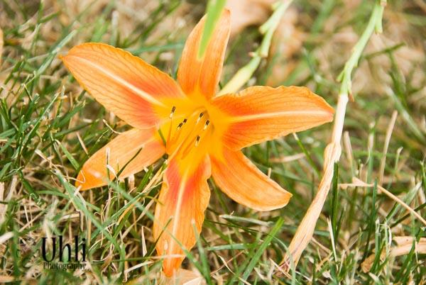 7.18.13 - Orange Flower
