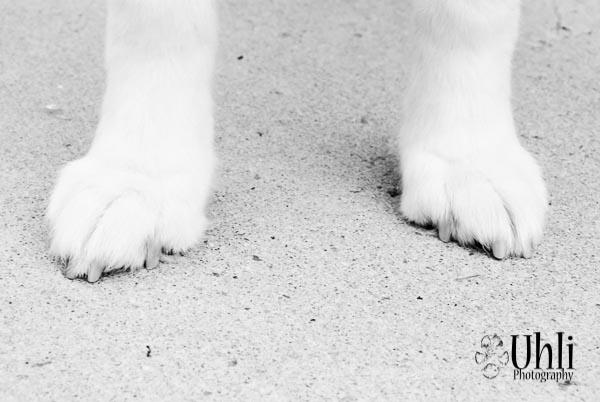 7.23.13 - Paws
