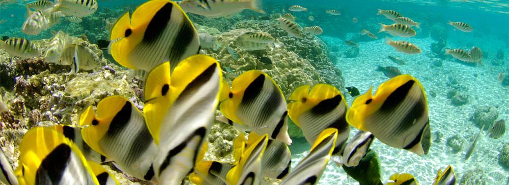 tahaa-snorkeling-1.jpg