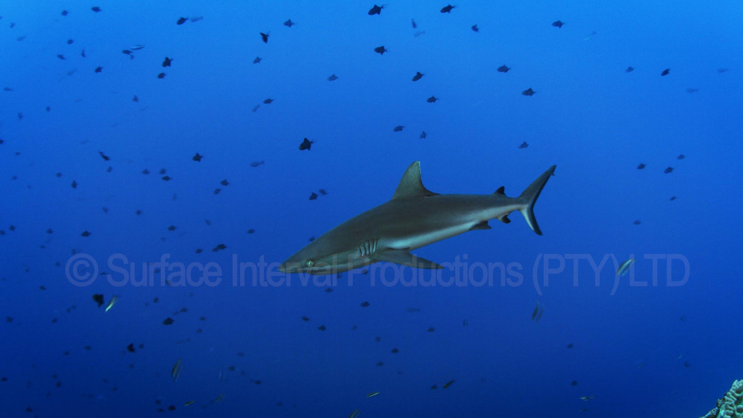 Shark 12a.jpg