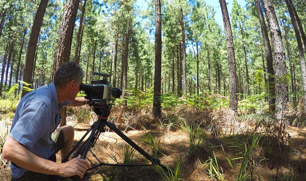 Russ filming in the Tsitsikama pine plantations.