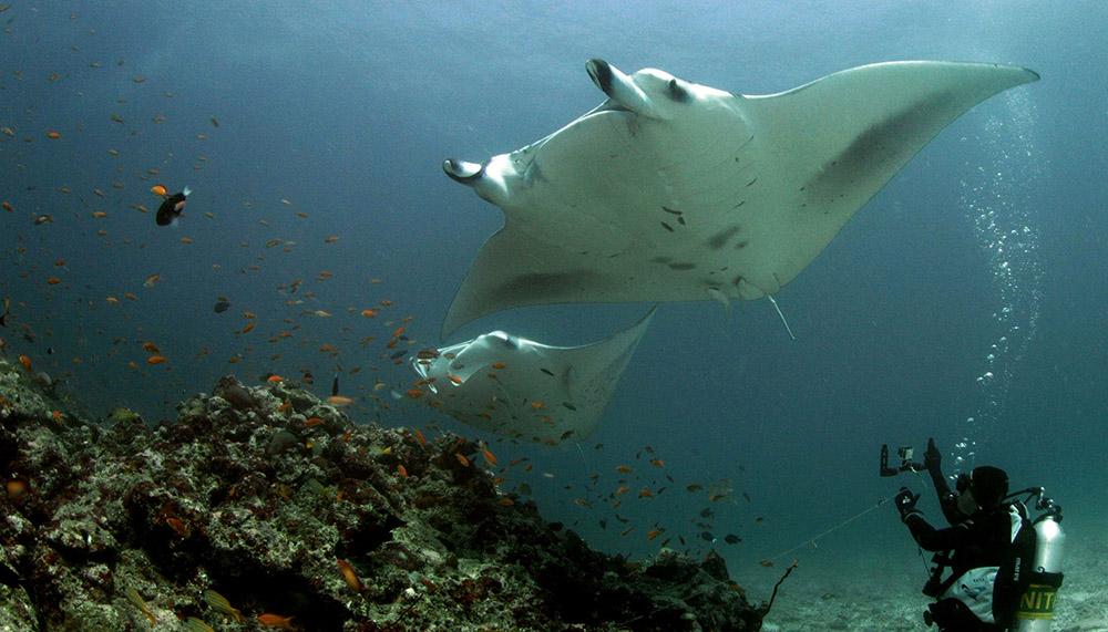 Barbara capturing some 4K GoPro footage of two Reef Manta Rays.