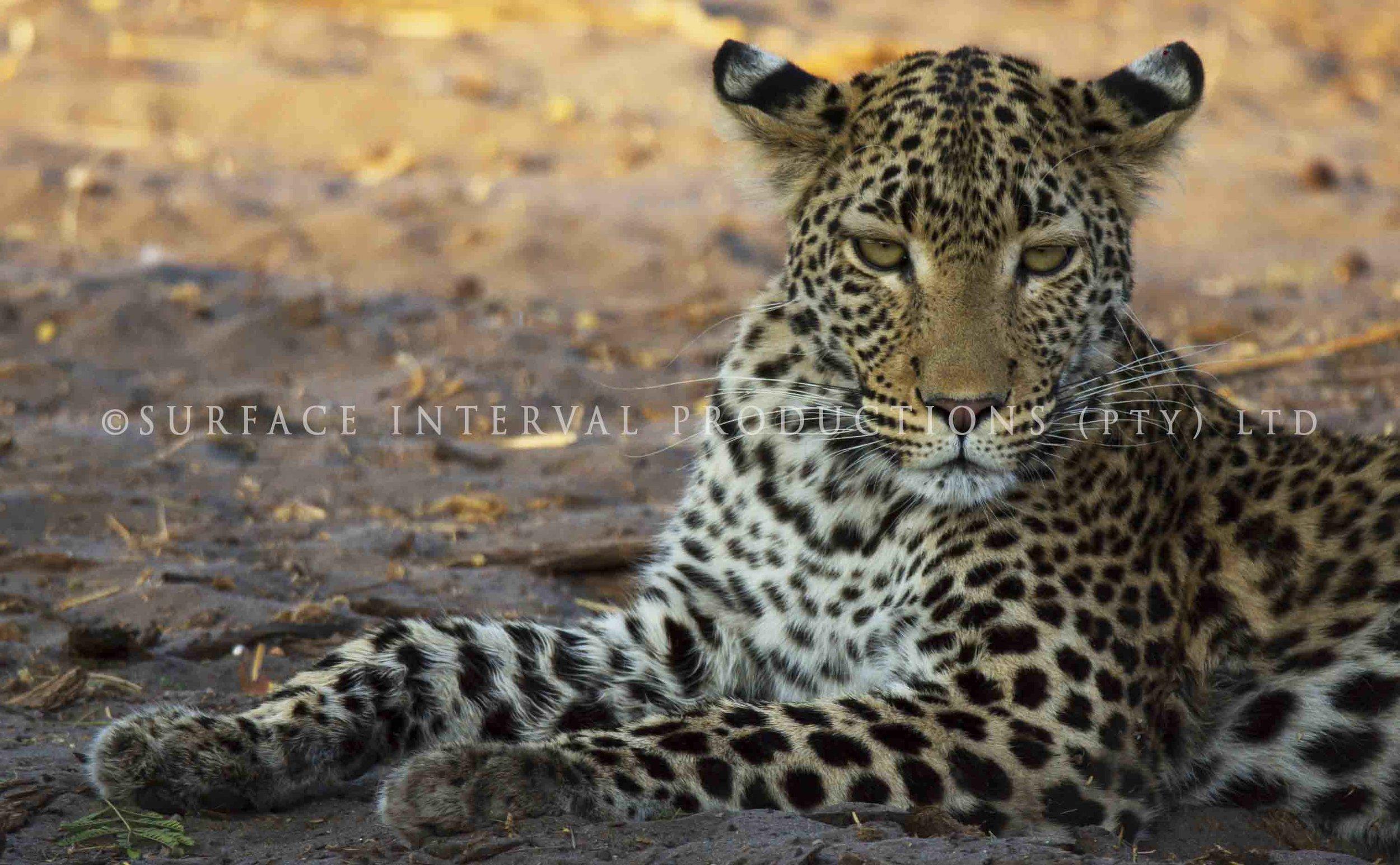 Leopard 02s.jpg