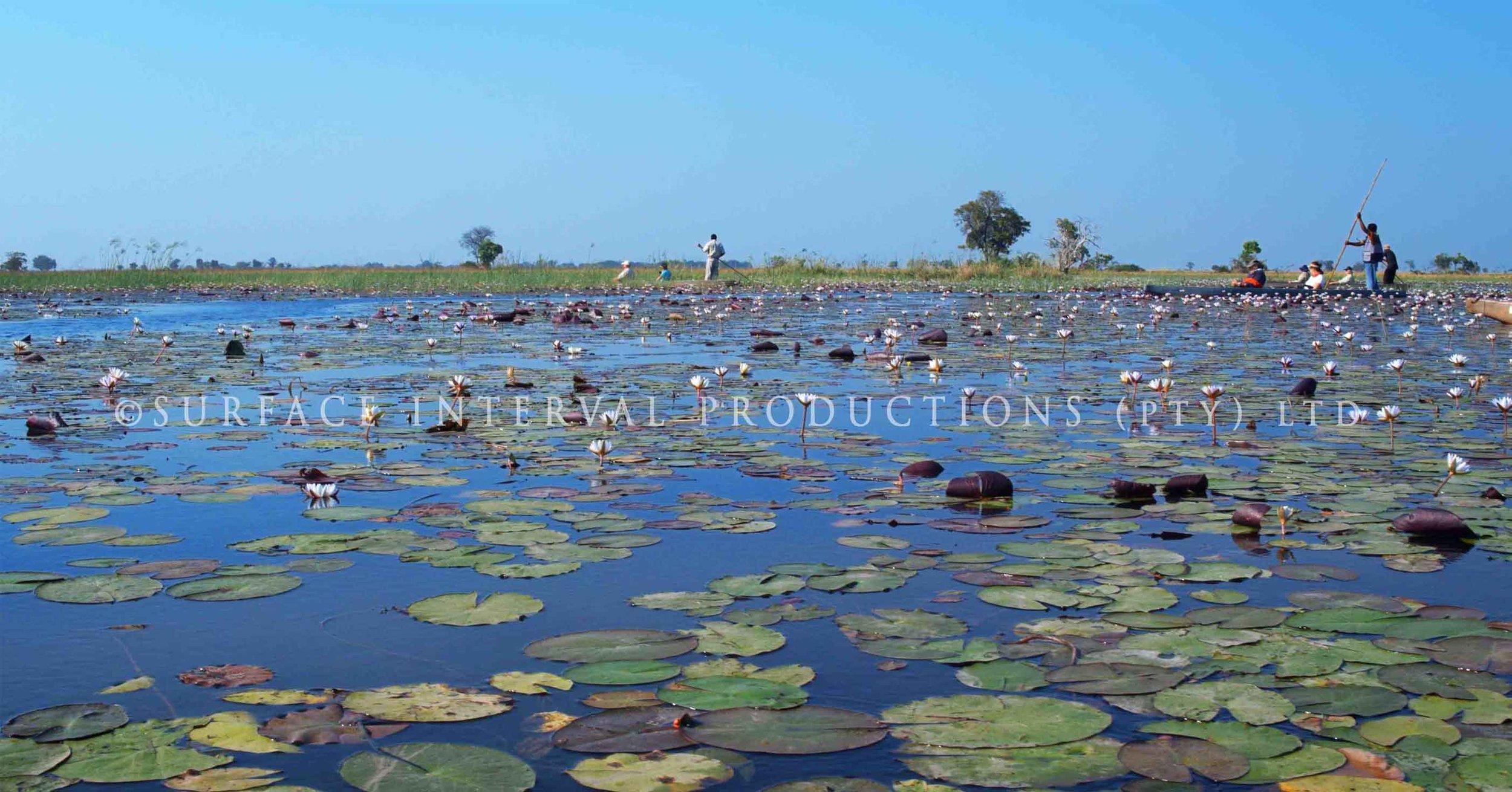 Okavango Delta 009ss.jpg