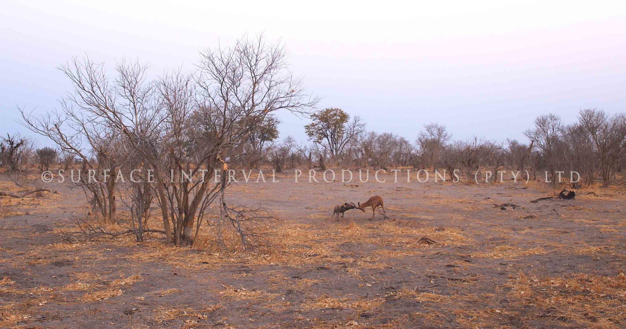 Wild Dogs 003as.jpg